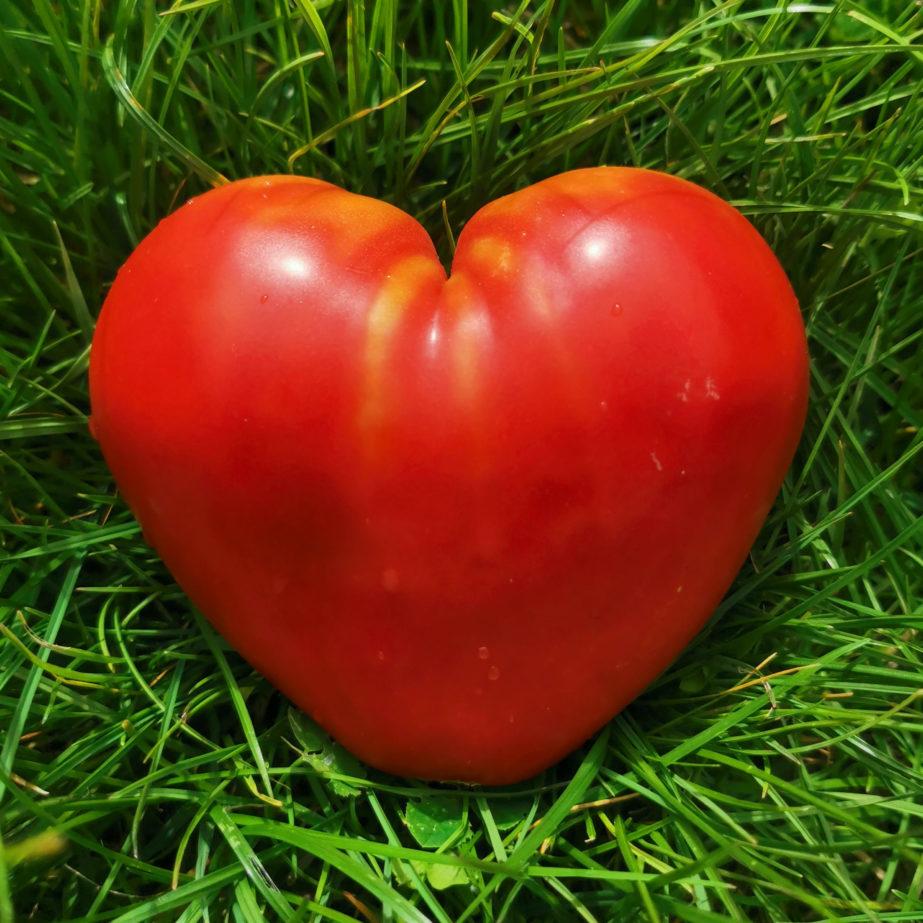 coeur tomate